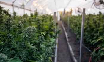 Cannabis ENSUR Document Mangement Software
